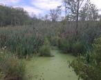 Acton_Massachusetts_wetlands.jpg