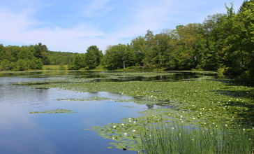 Blue_Giant_Meadow_Lake_2.JPG