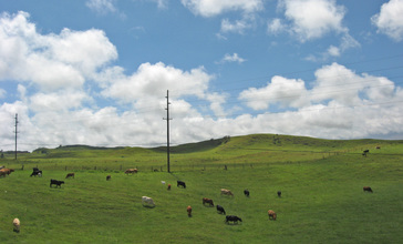 Waimea_pastures.JPG
