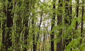 Carlisle_MA_forest_path.jpg