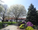 Odell_Park_in_the_Spring.jpg