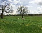 Appleton_Farms_Livestock.jpg