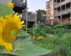 East_boston-community_garden.jpg
