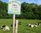 Rehoboth_a_right_to_farm_community.jpg
