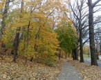 Forest_Park__Queens__NY__USA_-_panoramio__2_.jpg