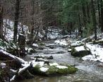 Stream_in_Fairfield__Vermont.jpg