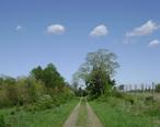 Holmdel_Park-Steeplechase_Trail.jpg