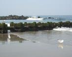 Spring_Lake_seagulls.jpg