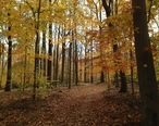 Watchung_Reservation_in_the_Fall_2013-11-05_01.jpg