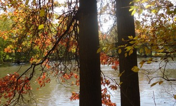 Gillette_New_Jersey_two_trees_on_a_riverbank_in_autumn.jpg