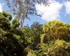 Wahiawa_Botanical_Garden_-_General_View.JPG