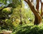Wahiawa_Botanical_Garden_-_shady_park_view.JPG