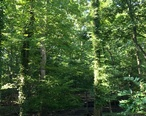 Woodwild_Park__Metuchen__NJ_-_forest_and_sign.jpg