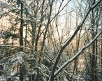 Winter_Scene_in_East_Otto__New_York__January_1998.jpg
