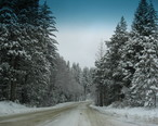 SnowFallBassLake.JPG