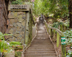 Dipsea_Trail_Stairs_Mill_Valley.jpg