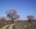 San_Luis_National_Wildlife_Refuge.JPG