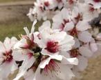 Blossom_Trail.JPG