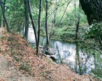 Los_Gatos_Creek_Trail.jpg