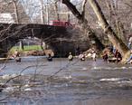 Trout_Fishing__Yellow_Breeches_Creek__Boiling_Springs__PA.jpg