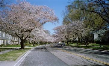 Crofton_Parkway_spring.JPG