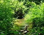 Wilsonville_Memorial_Park_Boeckman_Creek_2.JPG