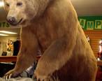 Kodiak_Bear_in_Macks_Sport_Shop_in_Kodiak.JPG