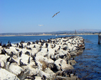 Monterey_rock_break.JPG