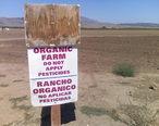 Organicfarmsoledad.jpg