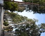 Howard-Ralston_Eucalyptus_Tree_Rows.jpg