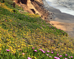 Erosion_and_spring_in_Pacifica.jpg