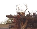 Fort_McDowell_Yavapai_Nation-Yavapai_resting_structure_reindeer_head.jpg