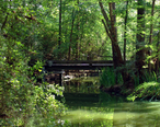 Forest_Bridge_in_The_Woodlands.jpg