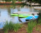Great_Blue_Heron__Woodlands_Waterway.jpg