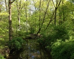 2013-05-04_16_50_33_View_down_the_West_Branch_Shabakunk_Creek_at_the_Rutledge_Avenue_Foot_Bridge_in_Ewing__New_Jersey.jpg