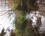 Johns_Creek__Chattahoochee_River__at_Findley_Road__Nov_2017.jpg