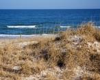 Dunes_and_Ocean.jpg