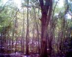 Largo_Central_Park_Nature_Preserve01.JPG