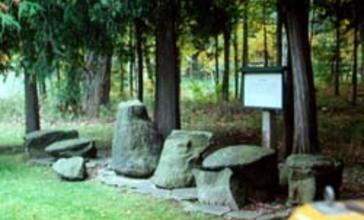 The_Gilboa_Fossils_from_the_Wattieza_tree_located_in_Gilboa__New_York.jpg
