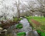 Salt-lick-creek-tn1.jpg