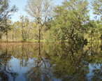 Kissengen_Spring_flooded_from_Peace_River_backflow_after_3_hurricanes_passed_through_the_area__October__2005.jpg