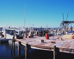 Shrimp__snapper__grouper__and_stone_crab_fishing_boats_at_Cortez__Florida.jpg