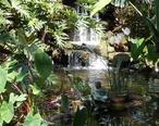 Fountain_Marie_Selby_Botanical_Gardens.JPG