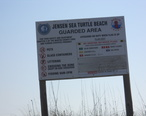 Jensen_Sea_Turtle_Beach_012.JPG