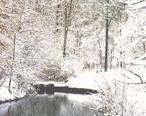 Snow_in_tuscaloosa.jpg