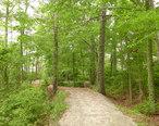 Poquoson__Virginia_Museum_Marsh_Path.JPG