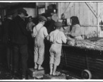 8_year_old_Max__one_of_the_shrimp_pickers._Only_a_small_force_was_working_that_day._Biloxi__Miss._-_NARA_-_523402.jpg