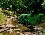 Creek_at_Municipal_Park_Opelika__AL.jpg