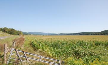 Upper_Tract_WV_-_corn_fields.jpg