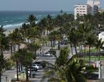 Palm_Trees_Line_Deerfield_Beach_Photo_D_Ramey_Logan.jpg